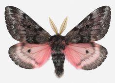 this beautiful moth