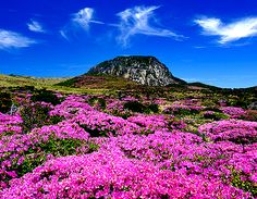 Wonderful nature at Hallasan National Park in South Korea | via Tumblr