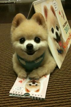 Yes, Shunsuke is the cutest dog EVER.