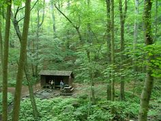 You'll travel past Harpers Creek Shelter and continue on a steady ascent over the summits of the Three Ridges in George Washington National Forest on this 10.2-mile trek.