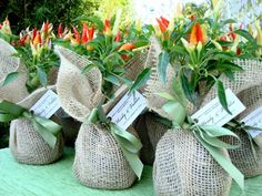 "Burlap wrapped plants as wedding favor giftswedding favors for a diy/garden/country wedding. ""like this plant, our love started small and will continue to grow .."" or ""like love, the most worthwhile things in life take time, dedication and nurturing."""