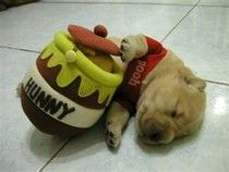 Puppy dog in Winnie the Pooh costume holding honey toy actually do look like Pooh! Love this Winnie the Pooh like dog. Crazy Halloween Costumes, Pet Costumes, Puppy Costume, Bear Costume, Costume Ideas, Puppies In Costumes, Elmo Costume, Costumes 2015, Funny Costumes
