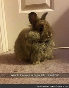 My new fish