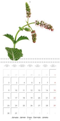 This calendar presents various kinds spices: chilies, ginger, fennel, as well as many herbs and healing ingredients used for a healthy cuisine. The pictures are informative, inspiring and mouth-watering all at once.