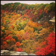 Fall colours at their peak<br>Colours as seen from Dundas Peak, above the town of Dundas, Ontario, Canada <br>Harry Cardwell/GuardianWitness
