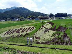 In Okayama Prefecture, there's a whole lot of Naruto-loving going on right now. Some rice farmers have made Naruto art out of their fields - after all, Okayama is home to Naruto creator Masashi Kishimoto. Hinata Hyuga, Naruto Shippuden Anime, Naruto Art, Anime Naruto, Boruto, Manga Anime, Naruto Kakashi, Otaku Meme, Anime Meme