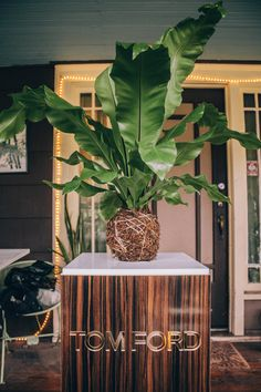 Before spring's arrival, we became inspired by yet another amazingly beautiful Japanese garden method, Kokedama. Kokedama is a style of Japanese bonsai, where a plant's root system is simply wrapped in sphagnum moss...