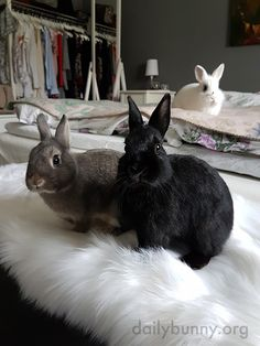 Monochromatic Bunnies Know Their Color Theory 2