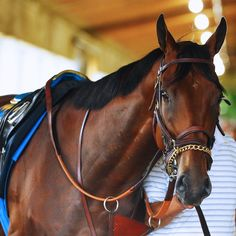 American Pharoah claims first Triple Crown since 1978
