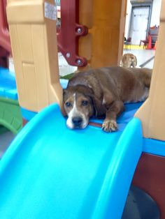February is a busy month for the folks at the cuyahoga county animal