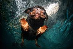 HAHAHAHA, dog diving into the water