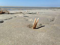 Muschelfeld am Strand