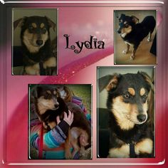 Lydia sucht ihre Familie und Hundekumpel. Sie ist erst 7 Monate alt und hat eine Schulterhöhe von ca. 30 cm.  Sie braucht etwas Zeit um Vertrauen zu fassen hat sie es erstmal gefasst zeigt sie sich sehr verschmust. Für Lydia wünschen wir uns eine Familie mit souveränen Ersthund da sie sich stark an anderen Hunden orientiert. Sie braucht natürlich noch etwas Erziehung daher sollte die neuen Besitzer schon etwas Geduld haben.  Lydia ist geimpft und gechipt. Sie wird nur nach Vorkontrolle und…