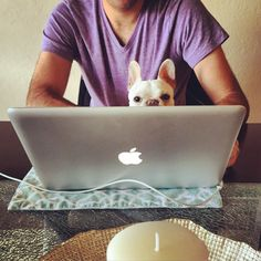 """My Dad's helping me buy my own treats online, he's awesome!"", French Bulldog Puppy."