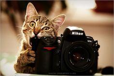 beautiful cat photos