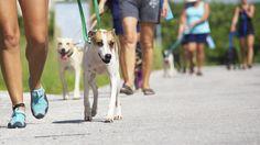 Pet's adoption - A New Perspective of Responsible Tourism - Riviera Maya Animal Shelter Playa del Carmen Mexico  (PAR)