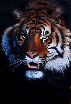 JasonMorgan - WILDLIFE, SPECIALIZING IN BIG CATS AND AFRICAN ANIMALS.