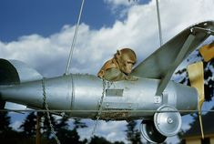 A monkey rides in a model airplane in New Hampshire, January Photograph by B. Anthony Stewart and John E. National Geographic Archives, Flotsam And Jetsam, Retro Robot, Tumblr, Documentary Photography, Model Airplanes, Art Store, New Hampshire, Fishing Boats