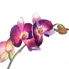 Orchids by Katerina Pytina