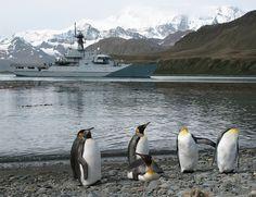 Hermosa la fauna de las Islas Malvinas. Argentina.