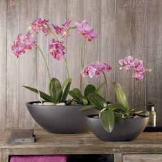tipps orchideen pflege wurzeln durchsichtige kunststoff behaelter quadrat orchideen pinterest. Black Bedroom Furniture Sets. Home Design Ideas