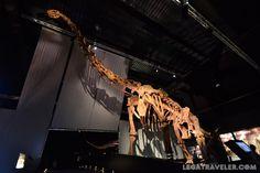 dinopolis-esqueleto-turiasaurus-riodevensis