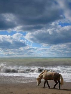 ♀ horse on the beach