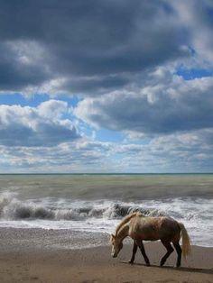 ♀ horse on the beach
