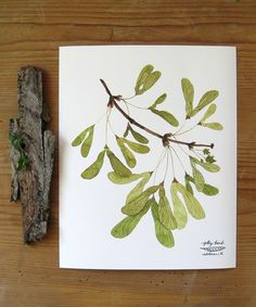 winged maple seed print by Golly Bard