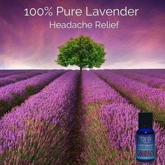 In need of relief from the pain of your headache but the pills just aren't working? Try our 100% pure premium grade of Lavender. Studies…