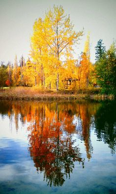 Autumn Reflect. From Cloud Sparks on Tumblr.