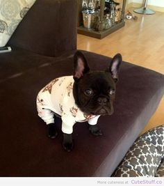 Frenchie Puppy In Pajamas | CuteStuff.co - Cute Animals, Cute Pictures, Cute Videos and MORE!