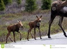 Resultado de imagen para mamiferos bebes