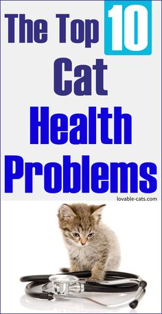 The Top 10 Cat Health Problems Beautiful Cats, Animals Beautiful, Zoo Animals, Funny Animals, Cat Toilet Training, Cat Health, Funny Animal Videos, Health Problems, Say Hello