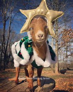 Poundcake. Costume Contest, Costume Ideas, Costumes, Lovers Romance, Funny Romance, Kids Laughing, Under The Mistletoe, Baby Goats, Animals Beautiful