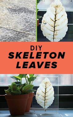 This Crazy Science Experiment Makes Leaves Completely See-Through Plant Experiments, Plant Science, Science Experiments Kids, Science Lessons, Science Education, Physical Science, Science Classroom, Earth Science, Elementary Science