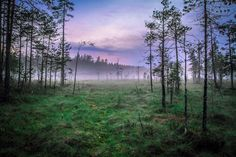 "Early Morning Mist on a Swamp - Helvetinjärvi National Park, Finland <p><a href=""www.facebook.com/laurilohiphoto"">Follow me on Facebook</a></p>"