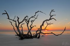 Driftwood Beach on Jekyll Island – Georgia | 21 Magical Places In The South You Won't Believe Actually Exist