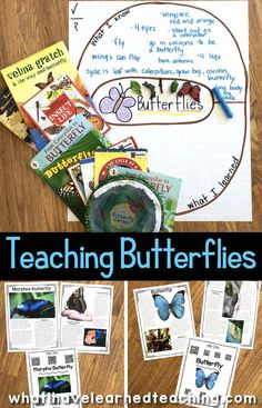 Butterfly teaching ideas to enhance your lesson plans about the life cycle of a butterfly. Primary Science, Kindergarten Science, Easy Science, Elementary Science, Science Experiments Kids, Science Classroom, Science Lessons, Teaching Science, Science For Kids