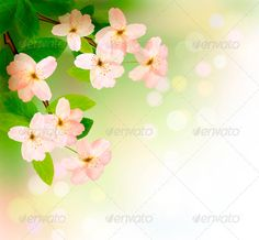 Spring Background with Blossoming Tree Brunch  #GraphicRiver         Spring background with blossoming tree brunch with spring flowers. Vector illustration. Fully editable, vector objects separated and grouped, no blends, gradient mesh used.     Created: 31January13 GraphicsFilesIncluded: VectorEPS Layered: No MinimumAdobeCSVersion: CS Tags: apple #april #aroma #background #bloom #blossoming #brunch #close #day #design #floral #flower #focus #fresh #garden #green #leaf #macro #march #may…