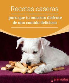 Recetas caseras para que tu mascota disfrute de una comida deliciosa - Mis animales  Si estás cansado de que tu mascota coma siempre lo mismo, y ella también, te damos la solución. Te mostramos una recetas caseras con las que disfrutará.