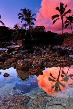 Hidden Turtle in a tide pool in Kona at sunset. Hawaii