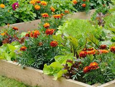 Companion planting: friends or foes? Some plants like each other and some don't. Give your plants a helping hand with this guide to some . Vegetable Garden Tips, Planting Vegetables, Lawn And Garden, Home And Garden, Herb Garden, Companion Gardening, Growing Tomatoes In Containers, Gardening For Beginners, Gardening Tips