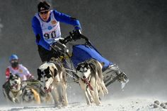 Austria's Joachim Buzek competes on the second day of the Dog Sleigh racing World championships in Slovakia's Donovaly resort on February