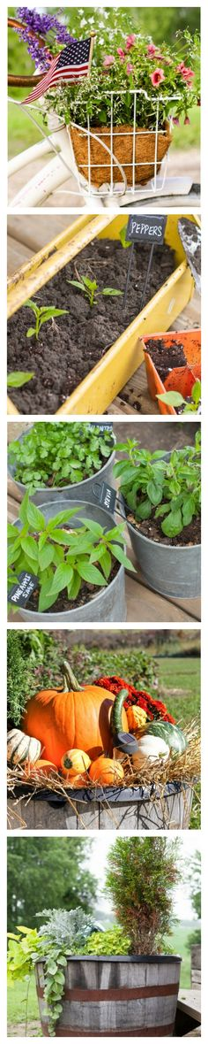 Container Garden Ideas and Plant List for What Grows Well in Containers