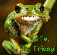 Frogs. Smile its Friday. #humor #funny
