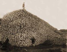A pile of bison skulls, Kansas, 1870s