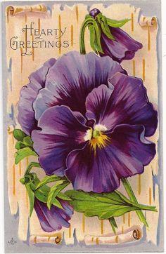 Vintage Postcard - pansy