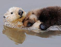 animaux en mode oreillers 30   31 photos danimaux en mode oreillers   sommeil raton laveur photo perroquet oreiller loutre lion lapin image ...