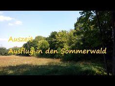 5 Minuten Auszeit für Deine Entspannung: Fantasiereise Sommerwald (Kurzmeditation) - Dr. Radomsky Coaching & Training